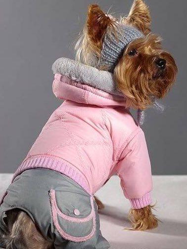 как сшить одежду для животных