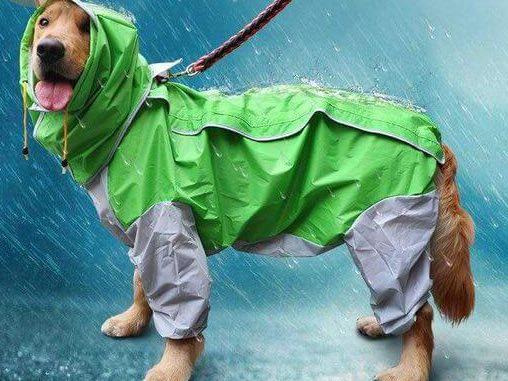 одежда для животных выкройка