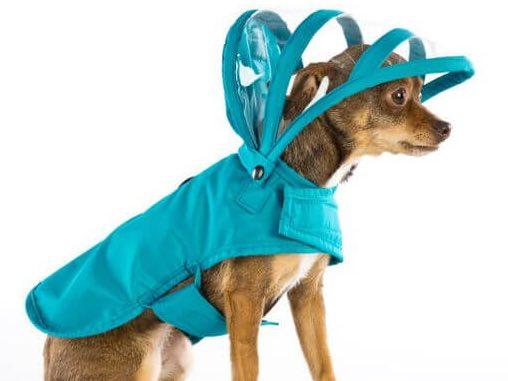сшить одежду для животных